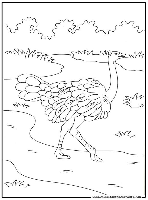 Coloriage et dessins gratuits Autruche dans la nature à imprimer