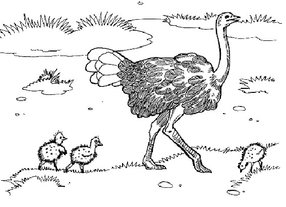 Coloriage et dessins gratuits Autruche et ses petits à imprimer