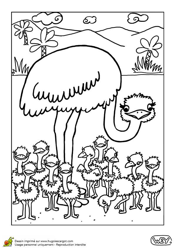 Coloriage et dessins gratuits Autruche et ses petits dans la forêt à imprimer