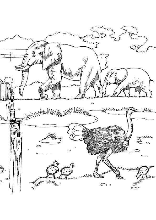 Coloriage et dessins gratuits Autruches et éléphants à imprimer