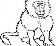 Coloriage et dessins gratuit Babouin en ligne à imprimer