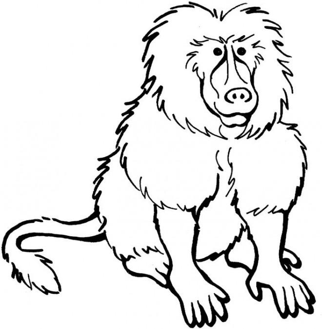 Coloriage et dessins gratuits Babouin en ligne à imprimer