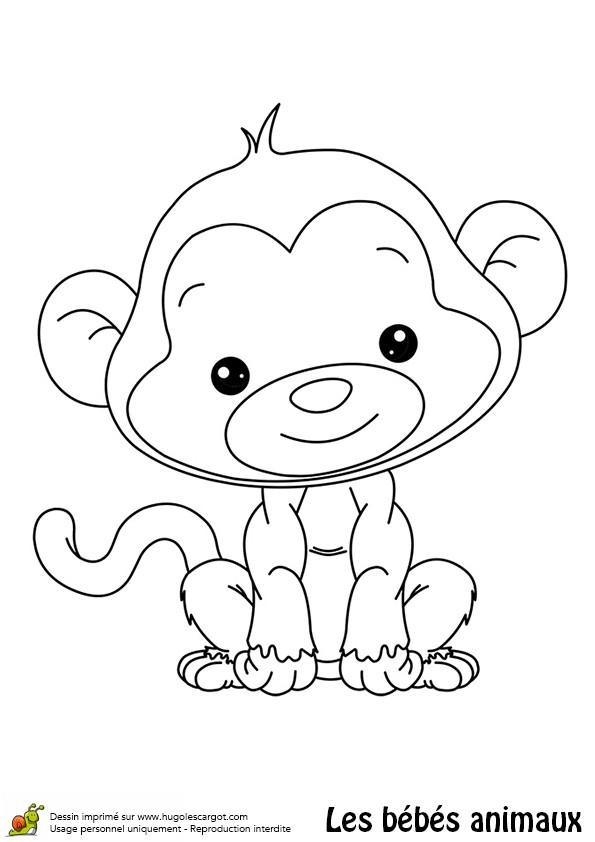 Coloriage et dessins gratuits Babouin mignon à imprimer