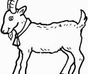Coloriage Chèvre facile à découper