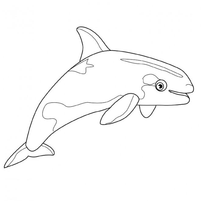 Coloriage et dessins gratuits Une petite Baleine à imprimer