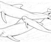 Coloriage dessin  Beluga 1