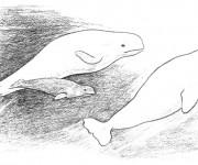 Coloriage Beluga au crayon