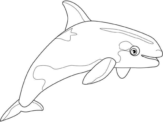 Coloriage et dessins gratuits Beluga couleur à imprimer