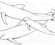 Coloriage Beluga
