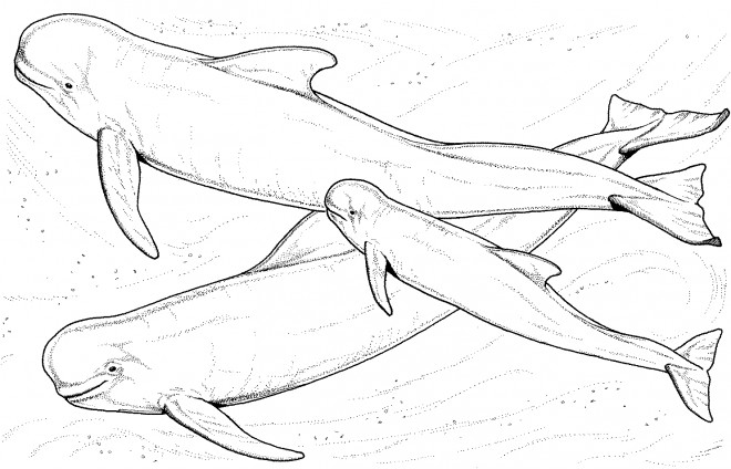 Coloriage et dessins gratuits Beluga en famille à imprimer