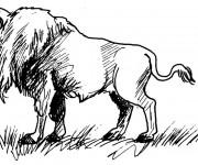 Coloriage et dessins gratuit Bison au crayon à imprimer