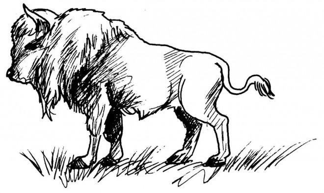 Coloriage et dessins gratuits Bison au crayon à imprimer