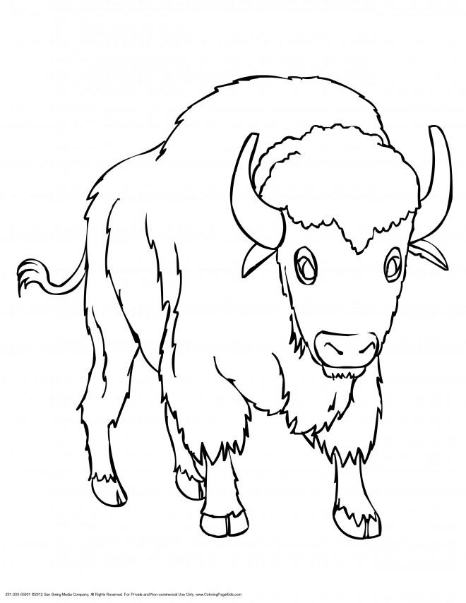Coloriage et dessins gratuits Bison couleur à imprimer