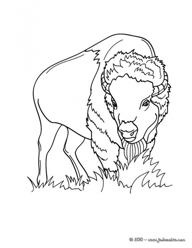 Coloriage et dessins gratuits Bison d'Amérique à imprimer