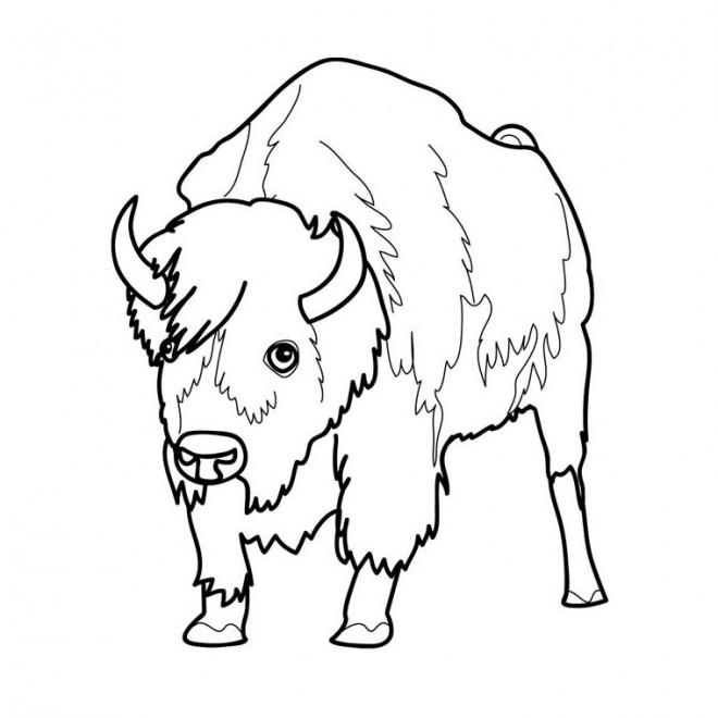 Coloriage bison d 39 am rique facile dessin gratuit imprimer - Coloriage bison ...