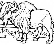 Coloriage bison dans la plaine dessin gratuit imprimer - Photo de bison a imprimer ...