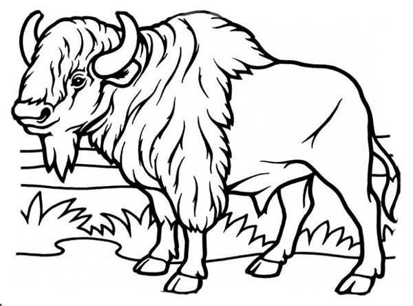 Coloriage Bison dans la plaine dessin gratuit à imprimer