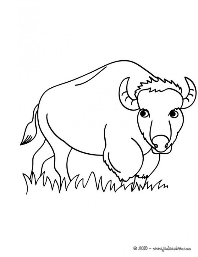Coloriage et dessins gratuits Bison dans le champ à imprimer