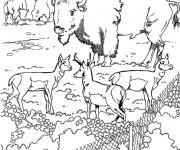 Coloriage et dessins gratuit Bison dans le zoo à imprimer