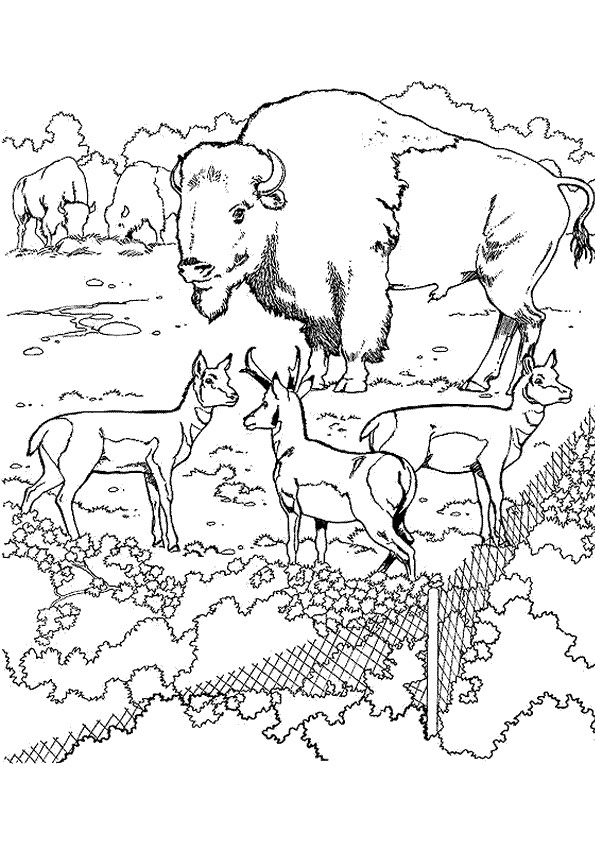 Coloriage et dessins gratuits Bison dans le zoo à imprimer