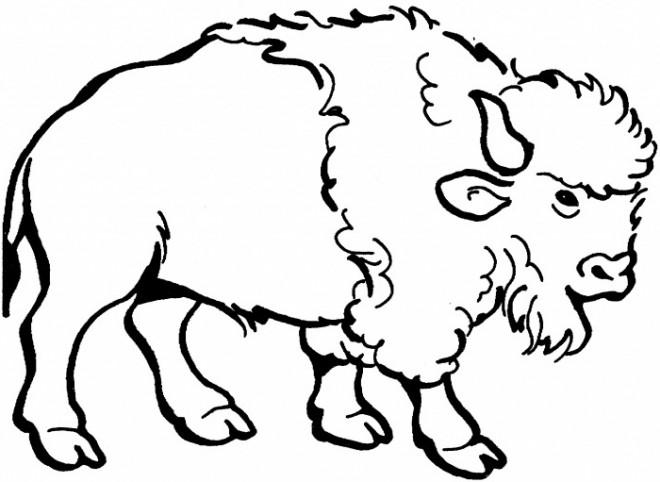 Coloriage et dessins gratuits Bison en couleur à imprimer