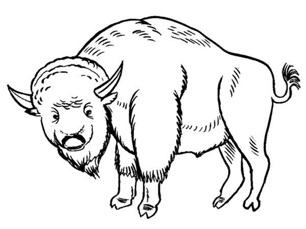 Coloriage et dessins gratuits Bison en  français à imprimer