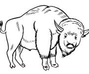 Coloriage et dessins gratuit Bison en ligne à imprimer