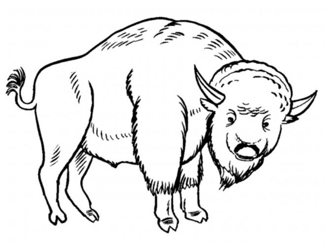 Coloriage et dessins gratuits Bison en ligne à imprimer