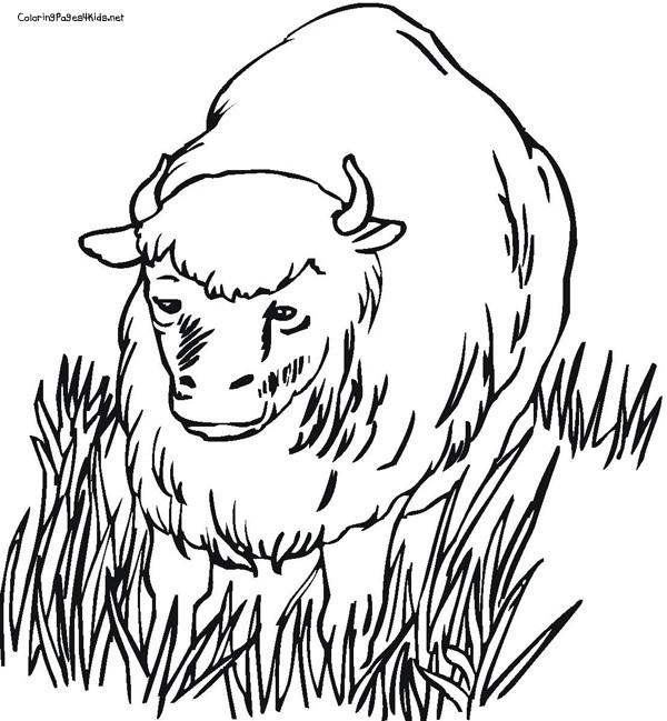 Coloriage et dessins gratuits Bison en plein air à imprimer