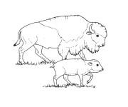 Coloriage et dessins gratuit Bison et son petit à imprimer
