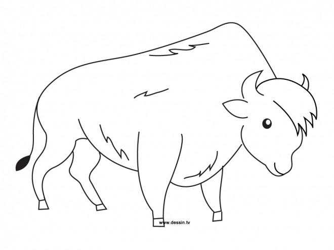 Coloriage et dessins gratuits Bison facile à imprimer