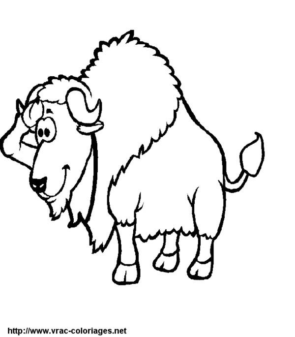 Coloriage bison rigolo dessin gratuit imprimer - Coloriage bison ...
