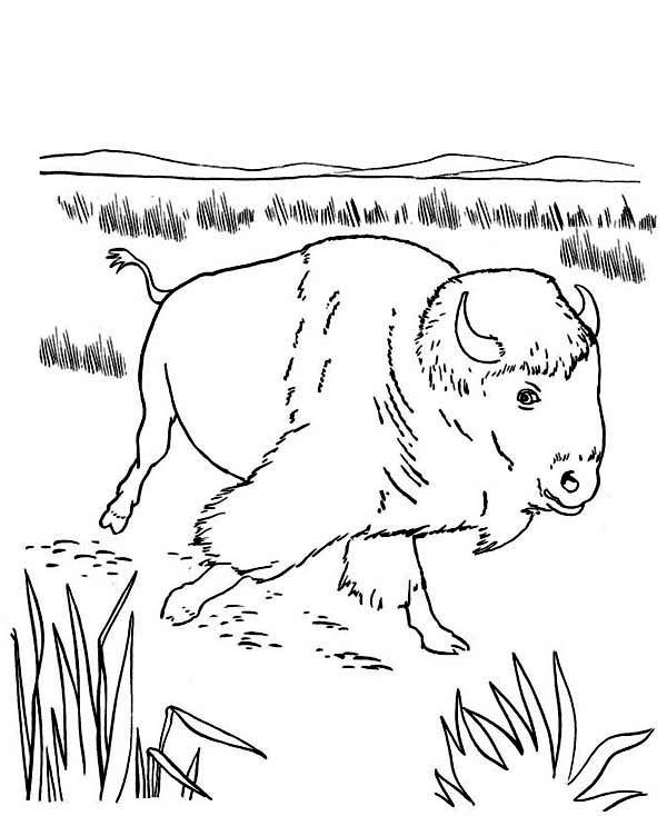 Coloriage et dessins gratuits Bison se promène à imprimer