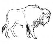Coloriage et dessins gratuit Bison simple à imprimer