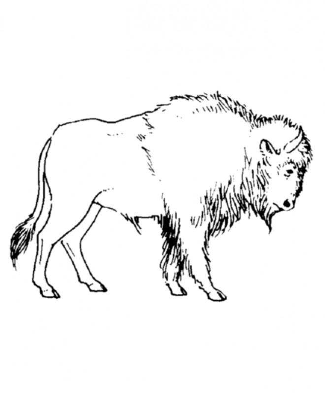 Coloriage et dessins gratuits Bison simple à imprimer