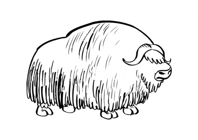 Coloriage et dessins gratuits Bison tout couvert à imprimer