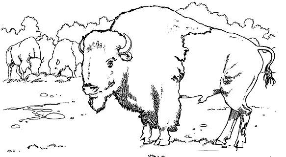 Coloriage et dessins gratuits Des bisons entrain de manger à imprimer