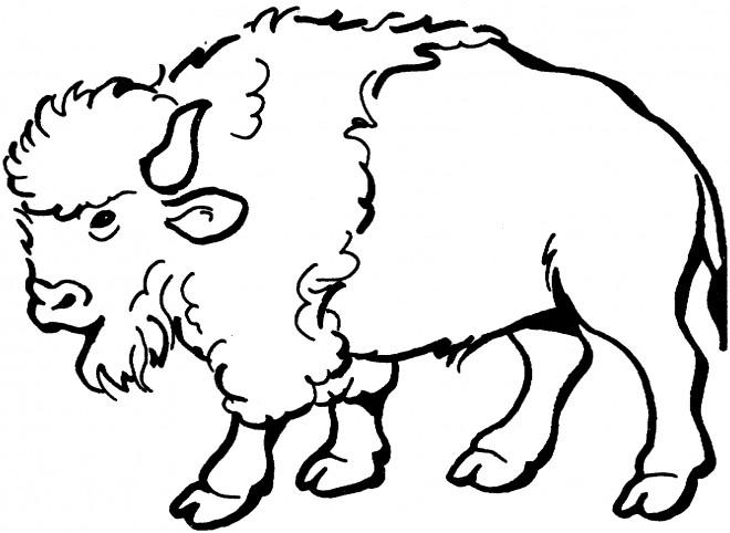 Coloriage et dessins gratuits Gros Bison à imprimer