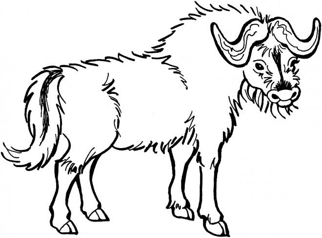 Coloriage et dessins gratuits Image vecteur d'un Bison à imprimer
