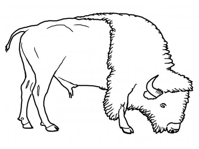 Coloriage et dessins gratuits Le Bison en mangeant à imprimer