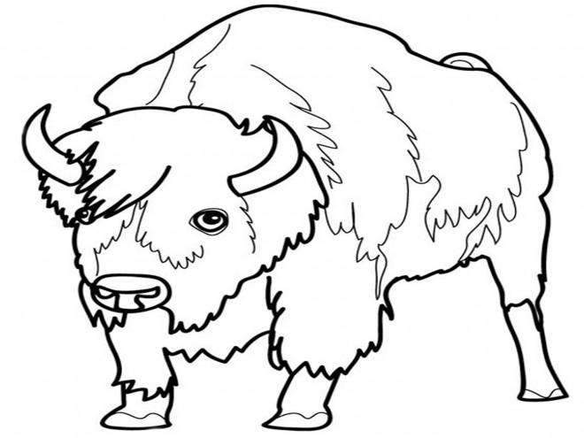 Coloriage et dessins gratuits Le regard de Bison à imprimer