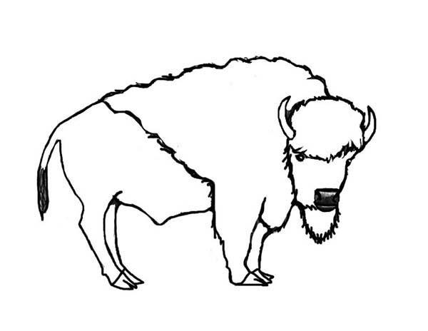 Coloriage petit dessin d 39 un bison dessin gratuit imprimer - Coloriage bison ...