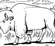 Coloriage et dessins gratuit Un Bison marche en forêt à imprimer