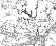 Coloriage et dessins gratuit Un gigantesque bison dans un zoo à imprimer