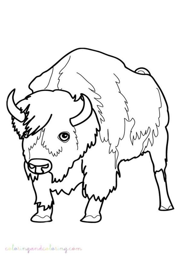 Coloriage et dessins gratuits Un portrait de Bison à imprimer