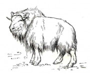 Coloriage Bison des steppes