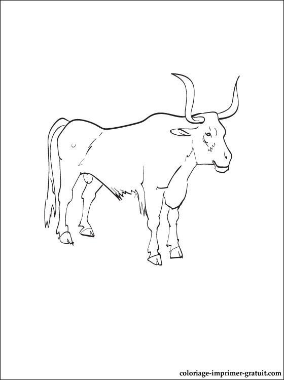 Coloriage et dessins gratuits Boeuf Africain à imprimer