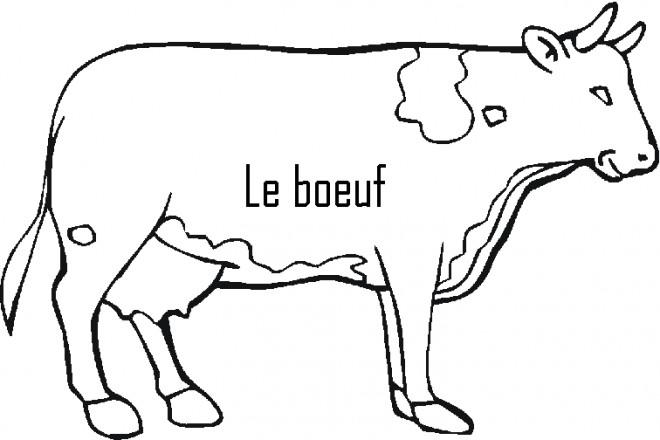 Coloriage le boeuf couleur dessin gratuit imprimer - Dessiner une vache ...