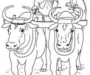 Coloriage et dessins gratuit Paysan et Boeufs à imprimer