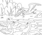 Coloriage Beau dessin des Canards sur la rivière